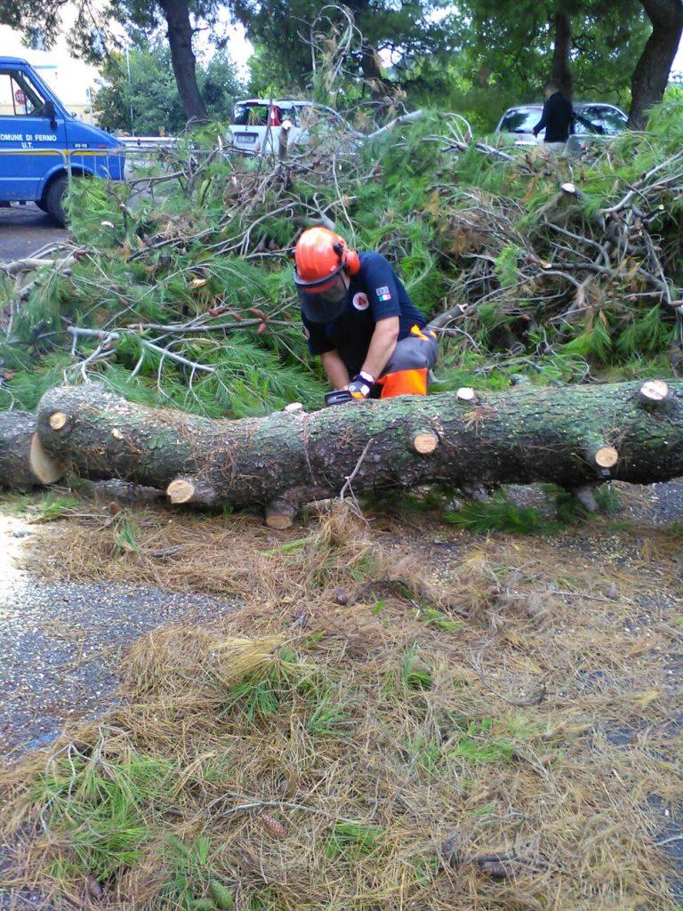 Protezione Civile albero 2