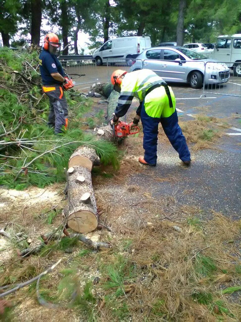 Protezione Civile albero