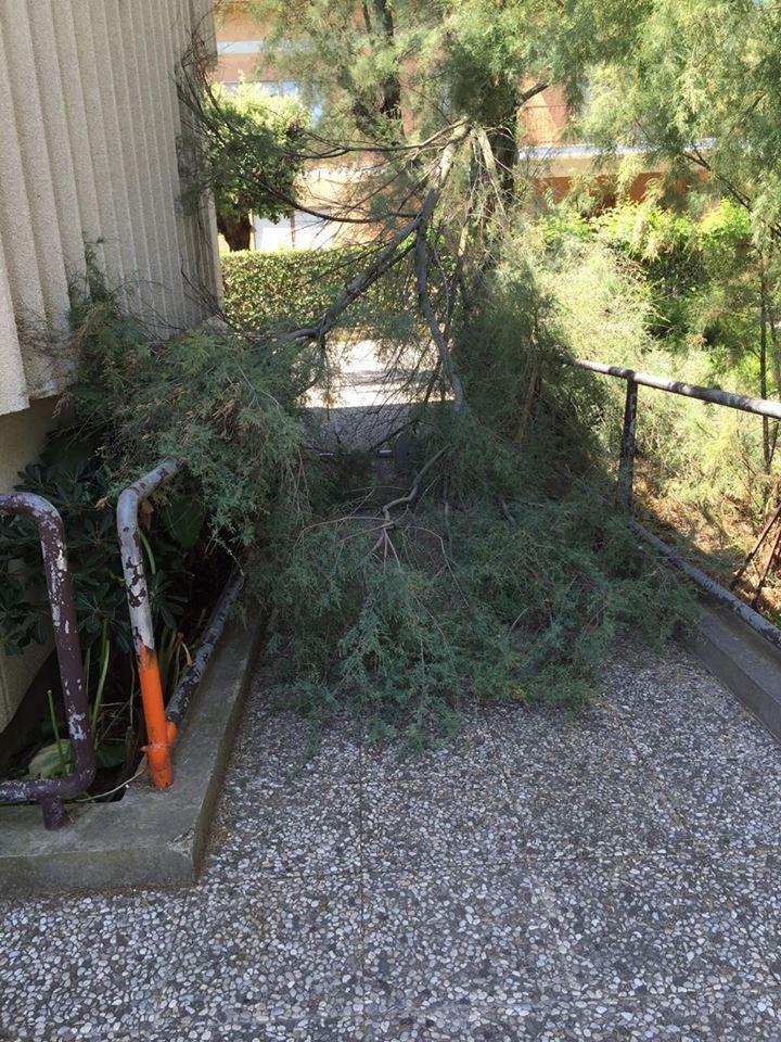 poste marina palmense rami alberi