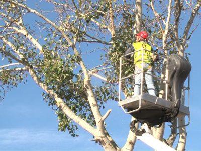 abbattimento_alberi