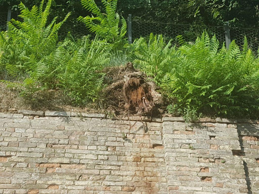 pianta crollata Fermo 1
