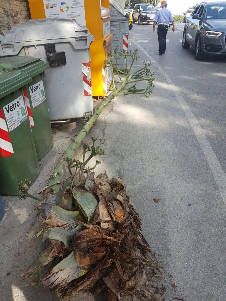 pianta crollata Fermo 6