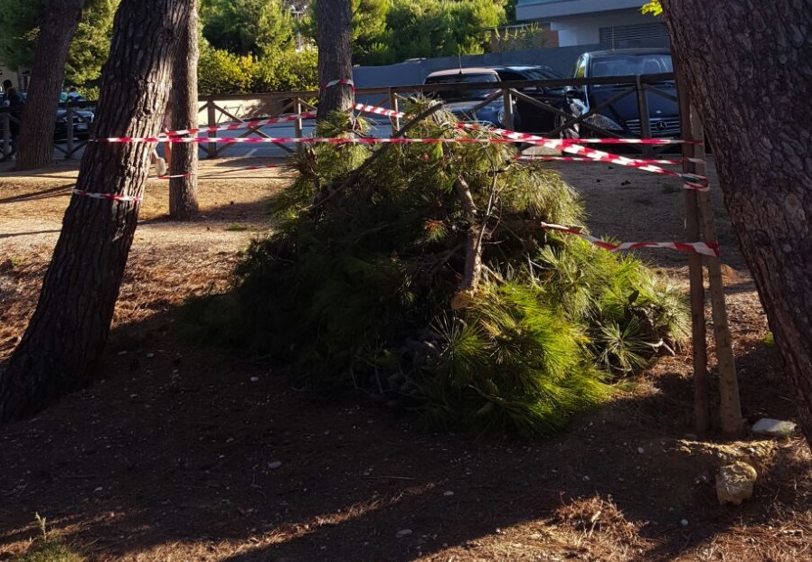 pineta ramo crollato Porto Sant'Elpidio