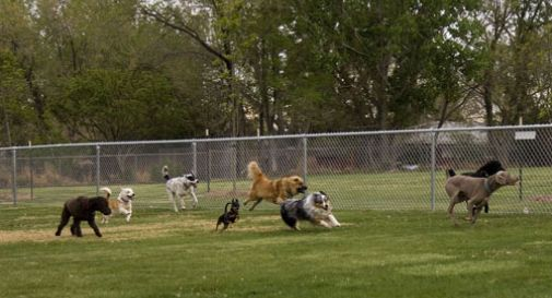 sgambamento cani