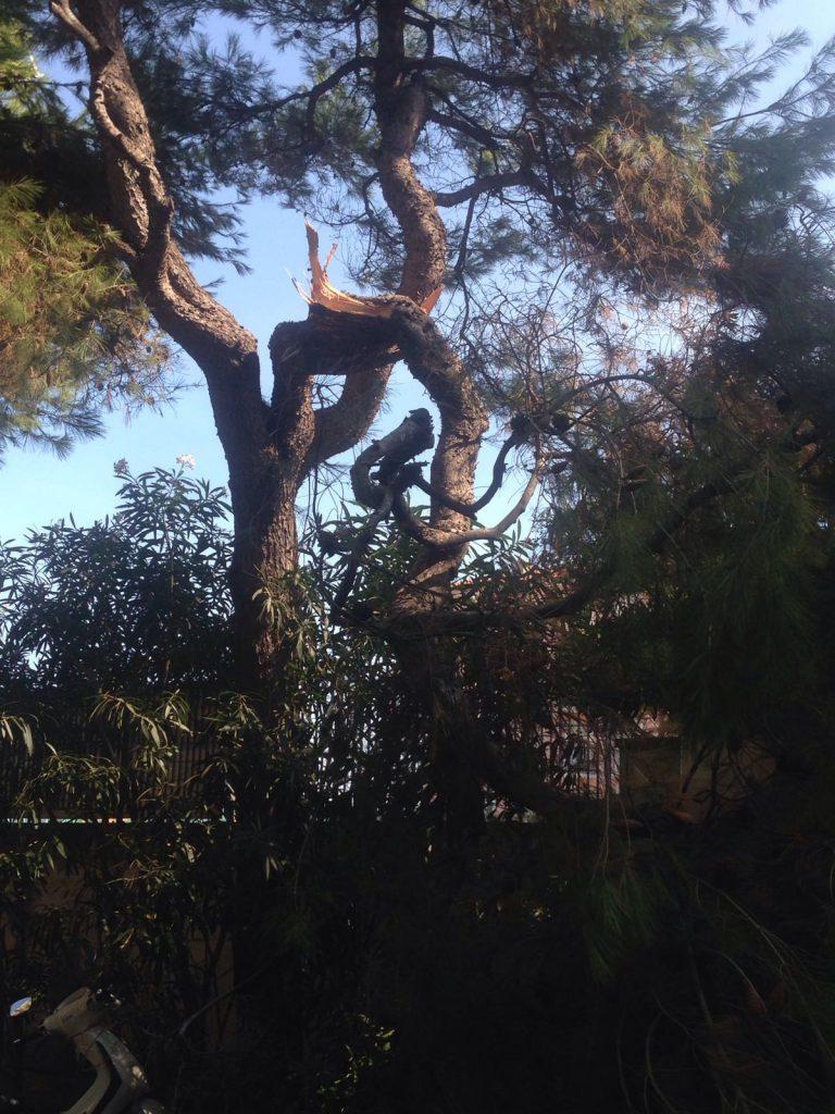 albero-circoli-tennis-1
