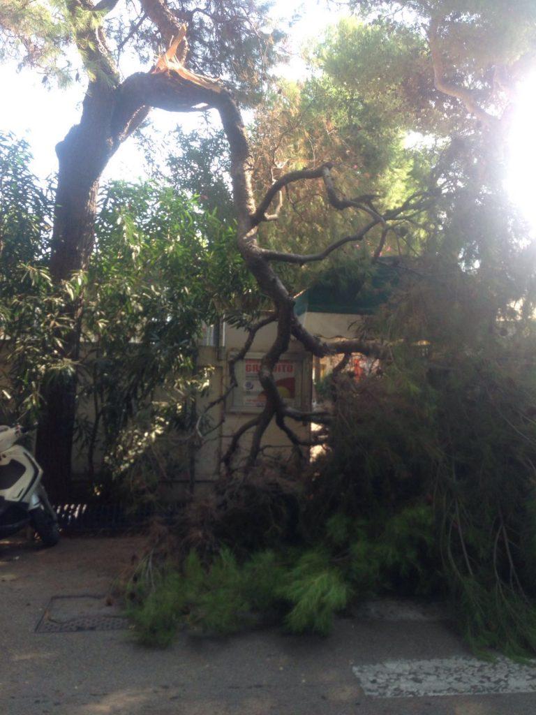 albero-circolo-tennis-2
