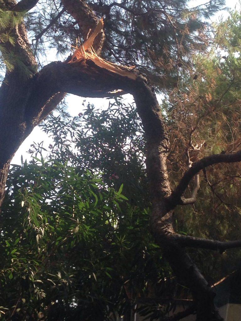 albero-circolo-tennis-3