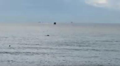 delfino-al-porto