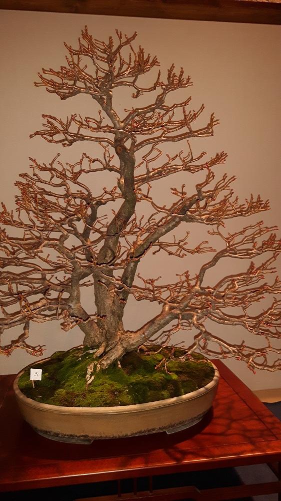 bonsai-2-1